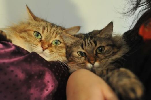 Rencontre avec Ewine & Flee, deux magnifiques princesses ! - Yummypets