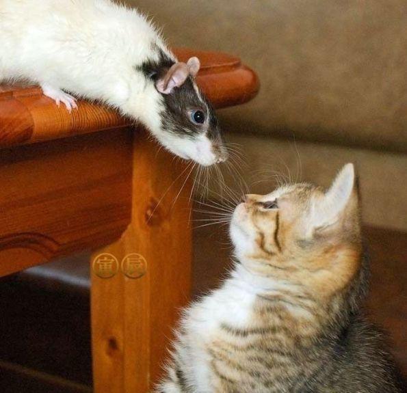 litiere pour chats