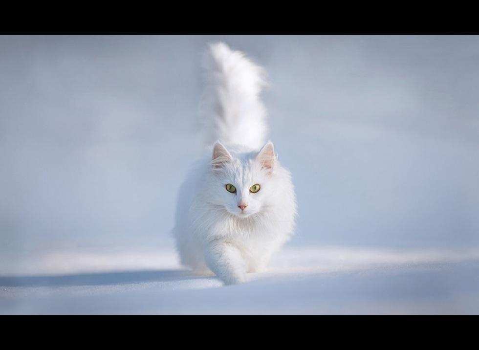 l 'hiver est là ! Blog_yummypets_animaux_neige_9_01_2014