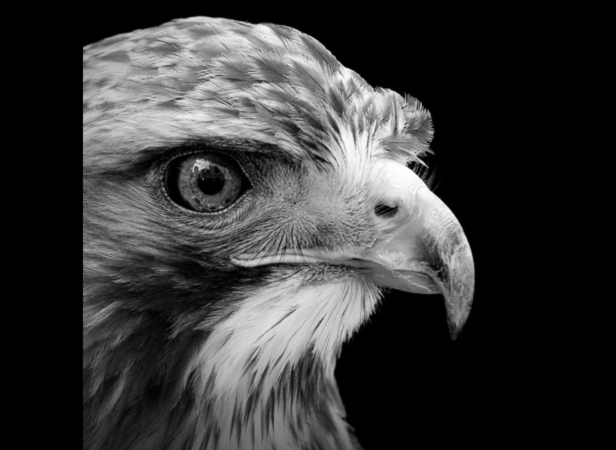 Beautiful black and white photos of animals - Yummypets