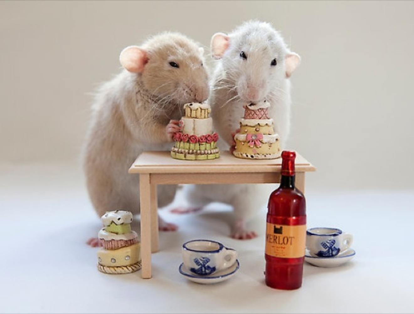 https://blog.yummypets.com/wp-content/uploads/2014/02/blog_yummypets_rat_gouter_02_14.jpg