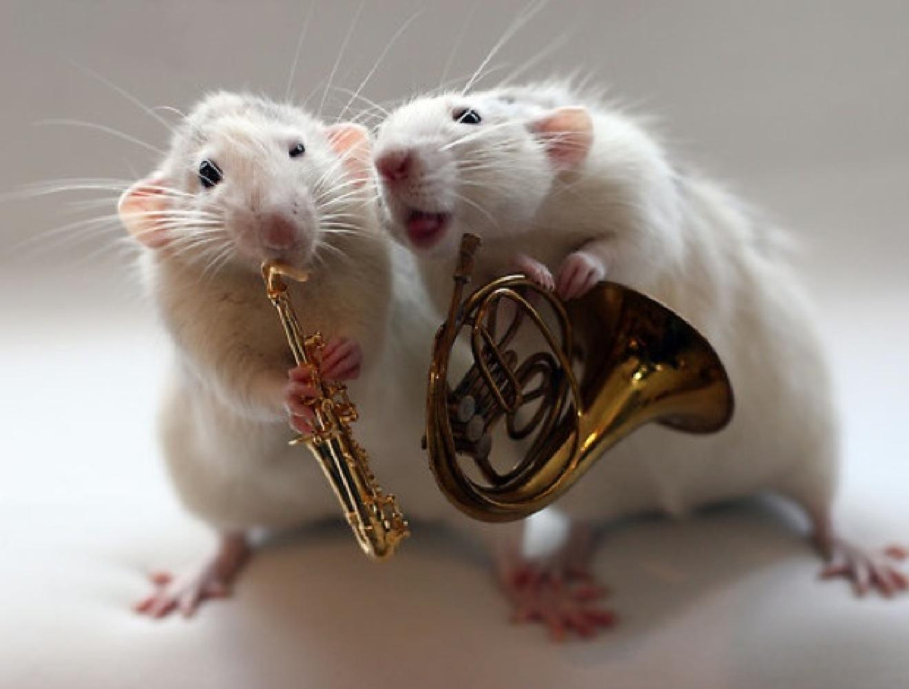 Букет, прикольные картинки с мышами прикольные