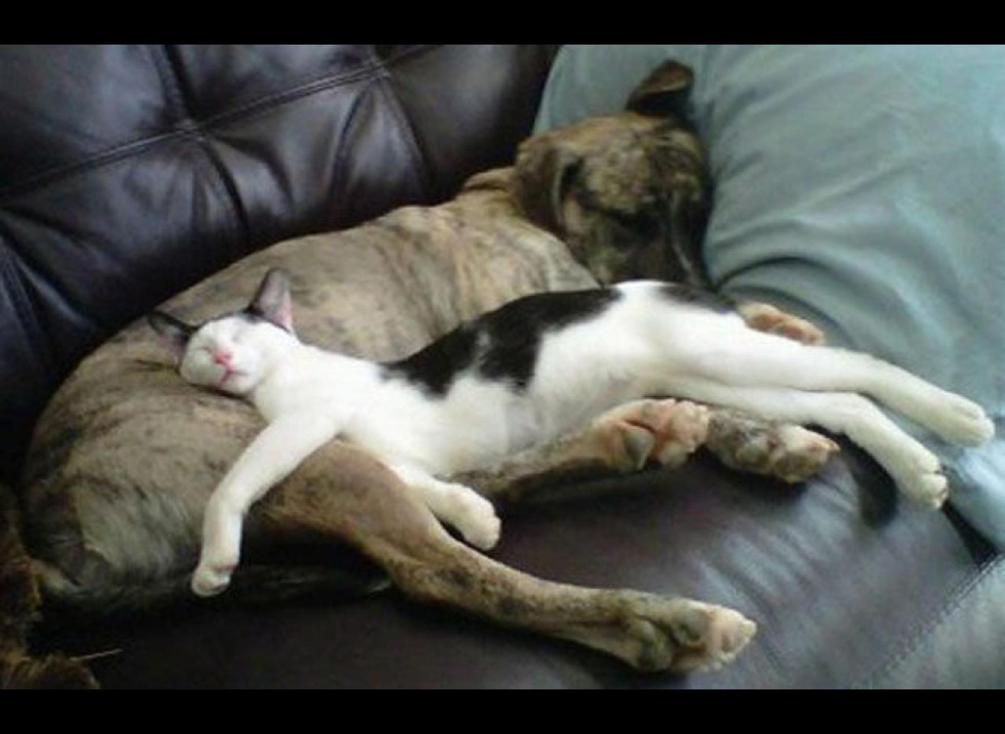 Výsledek obrázku pro DOGS AND CATS