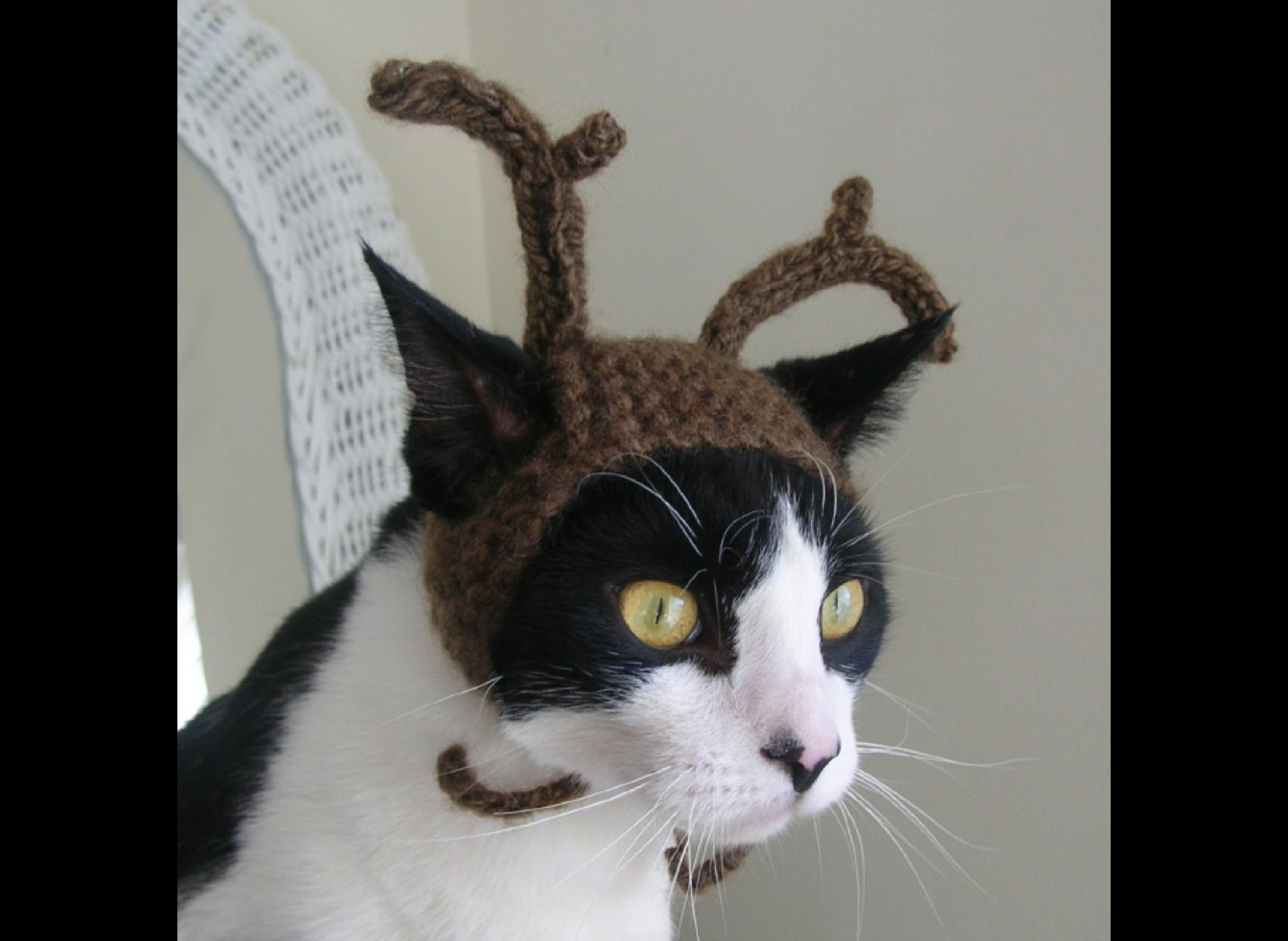 Cats with hats: simply fabulous! - Yummypets