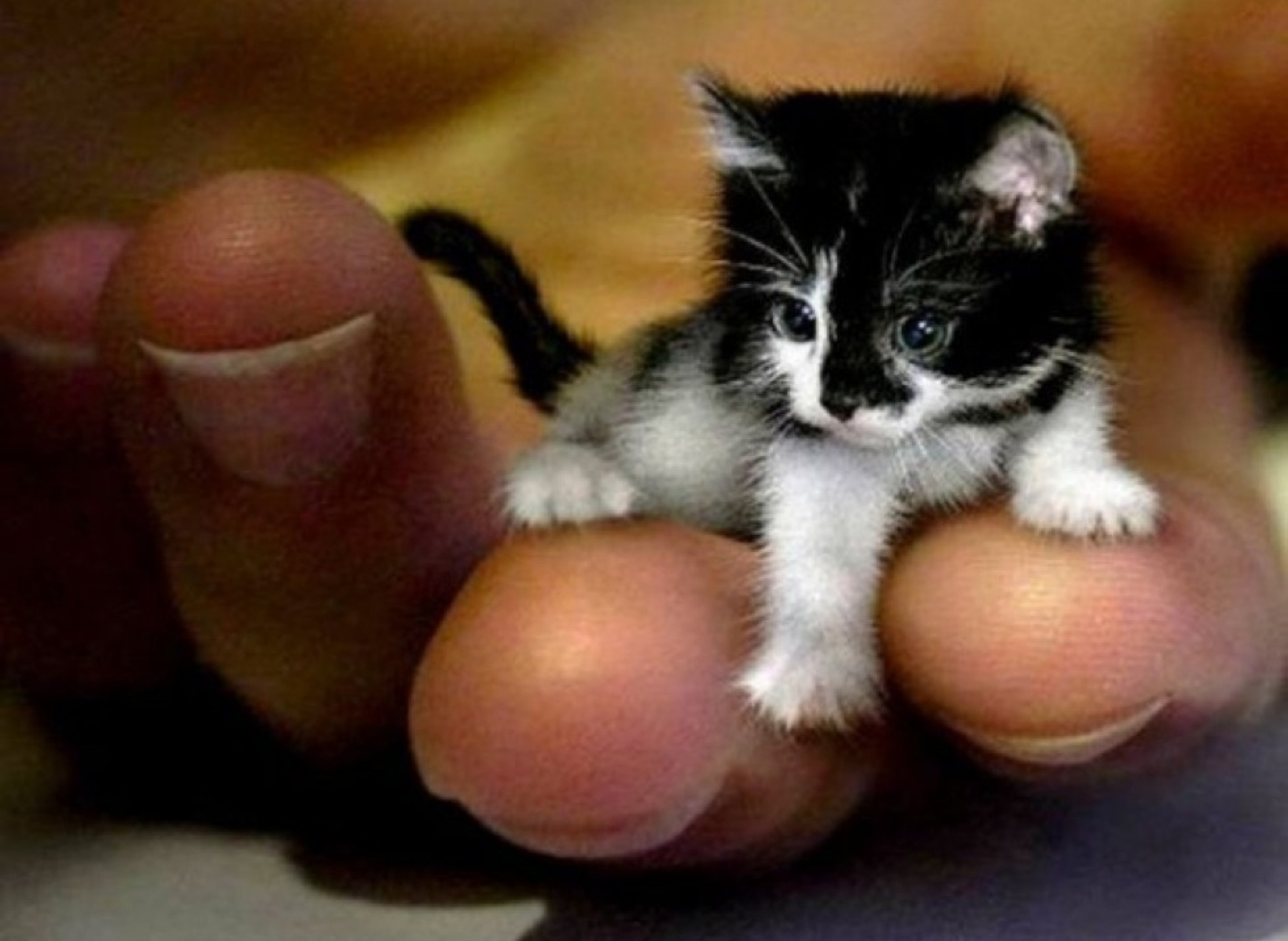 animals as tiny as fingers! - yummypets