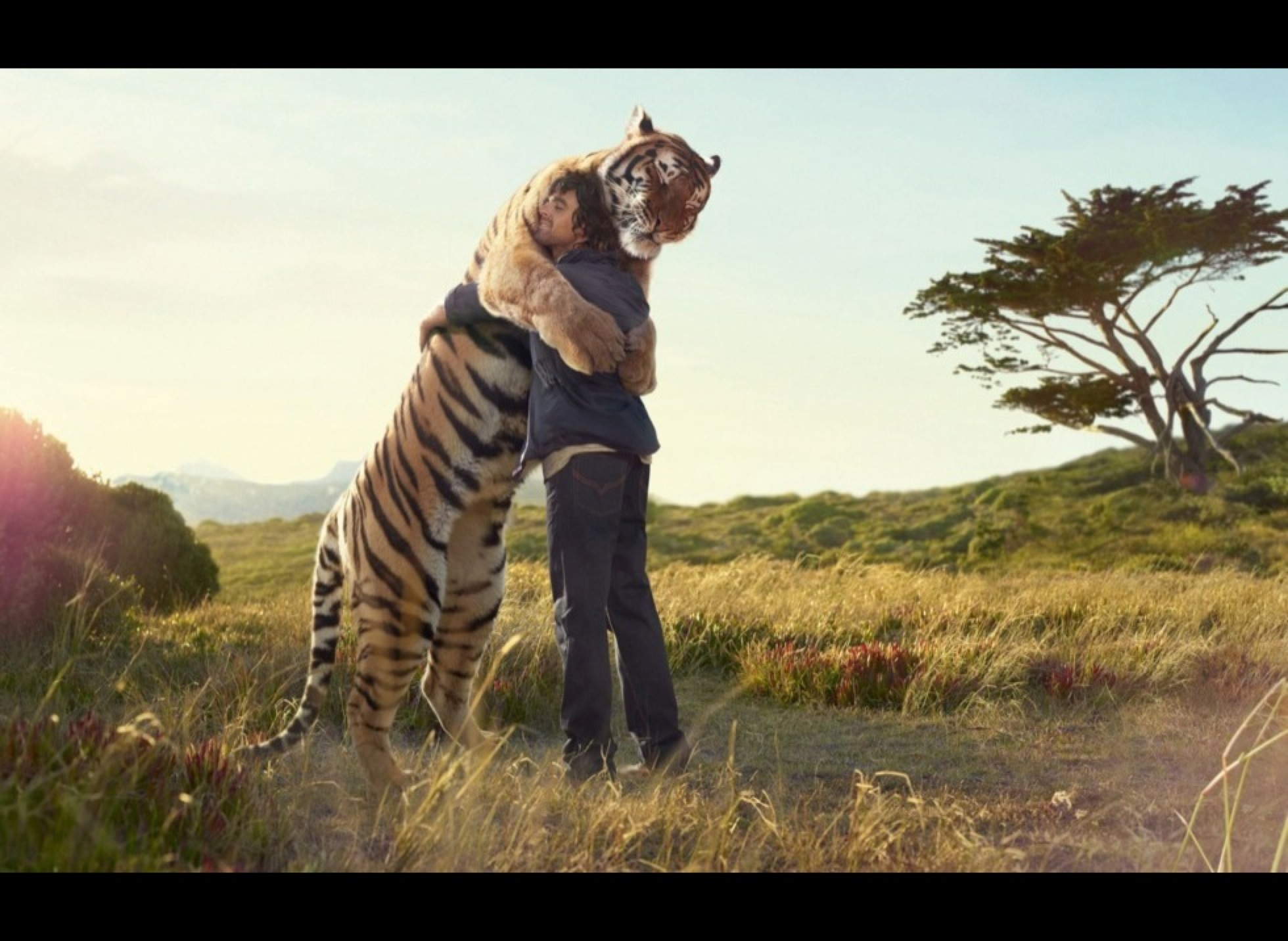 Love Animals Tigers Human Dude 1920x1080 Wallpaper Animals: Best Of Furry Hugs Photos To End This Friday