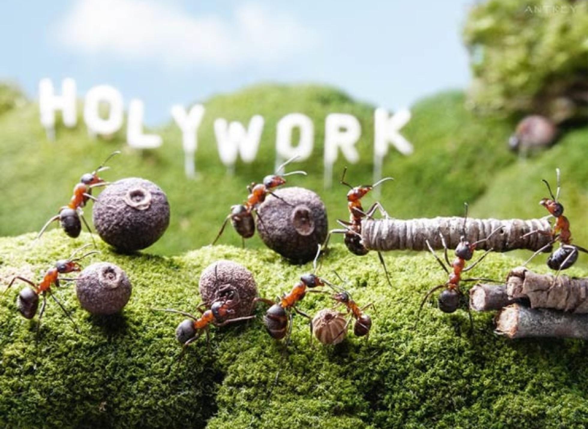 bienvenue dans le macro monde des fourmis yummypets. Black Bedroom Furniture Sets. Home Design Ideas